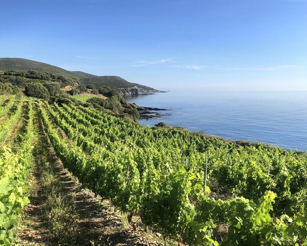 Provence, Corse : du rosé et rien d'autre ?